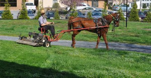 New Spin on Lawn Mowing – Amish-Style