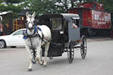 A is for Amish Buggy Rides
