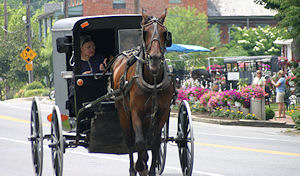 Amish buggy in Bird-in-Hand