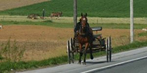 Amish open buggy with farmer in background