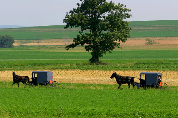 The Best Amish Farm Tour In Lancaster Pa