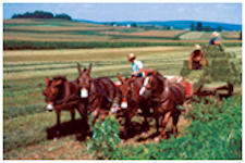 Amish Experience SuperSaver Tour