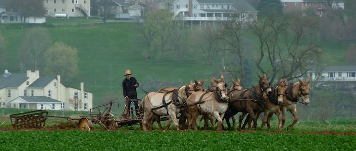 Amish Experience, Amish Farm And House Tour, Kitchen Kettle Village,.Print  Coupon And Compare Online Rates For Red Roof Inn Lancaster In Lancaster,.