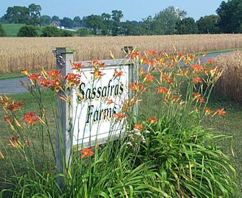 Sassafras Farms