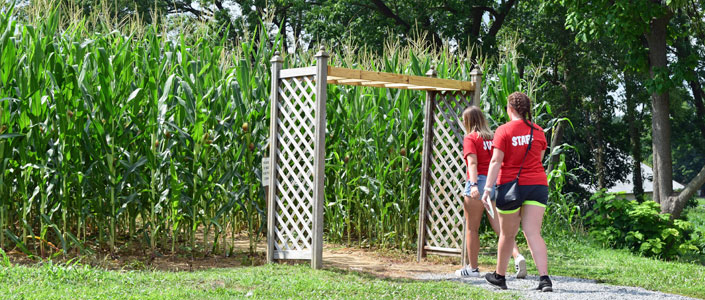 Amish Farm & House Corn Mave